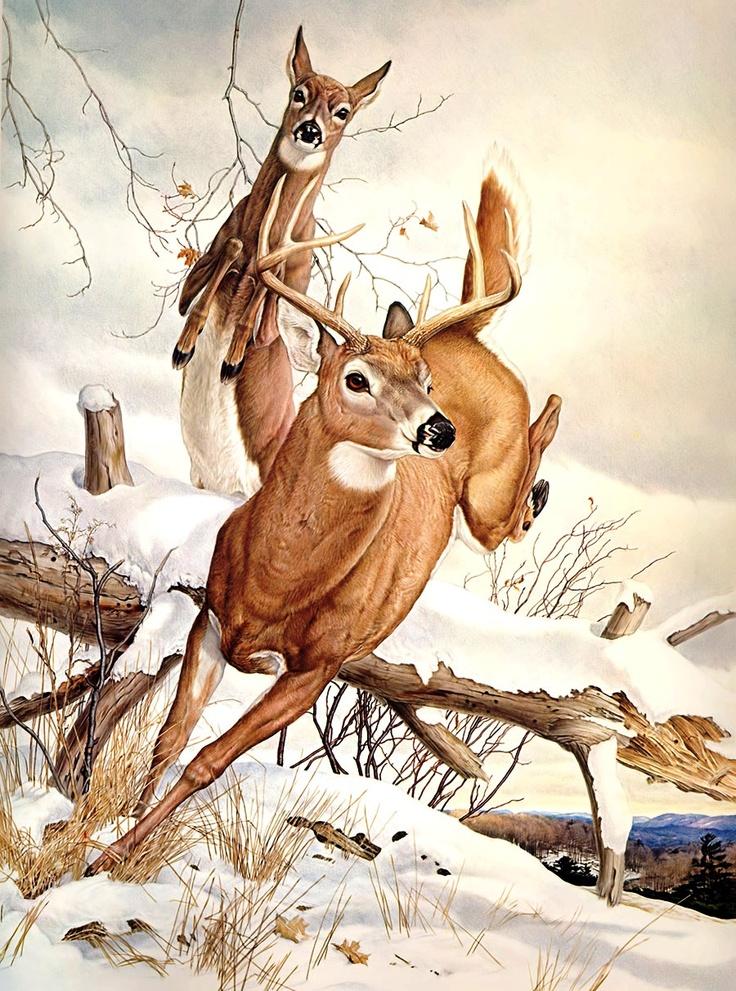 Buck Amp Doe Glen Loates Deer Pinterest