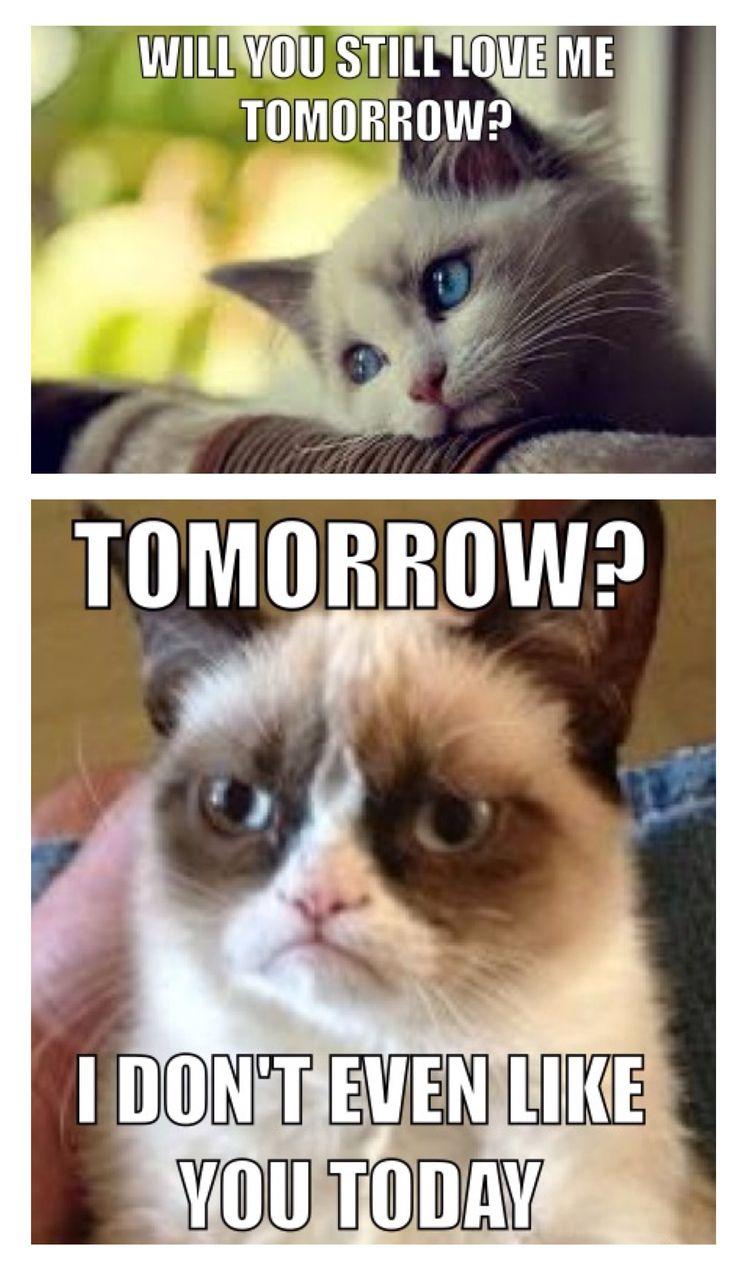 Grumpy Cat meme GrumpyCat grumpy cat(= Pinterest