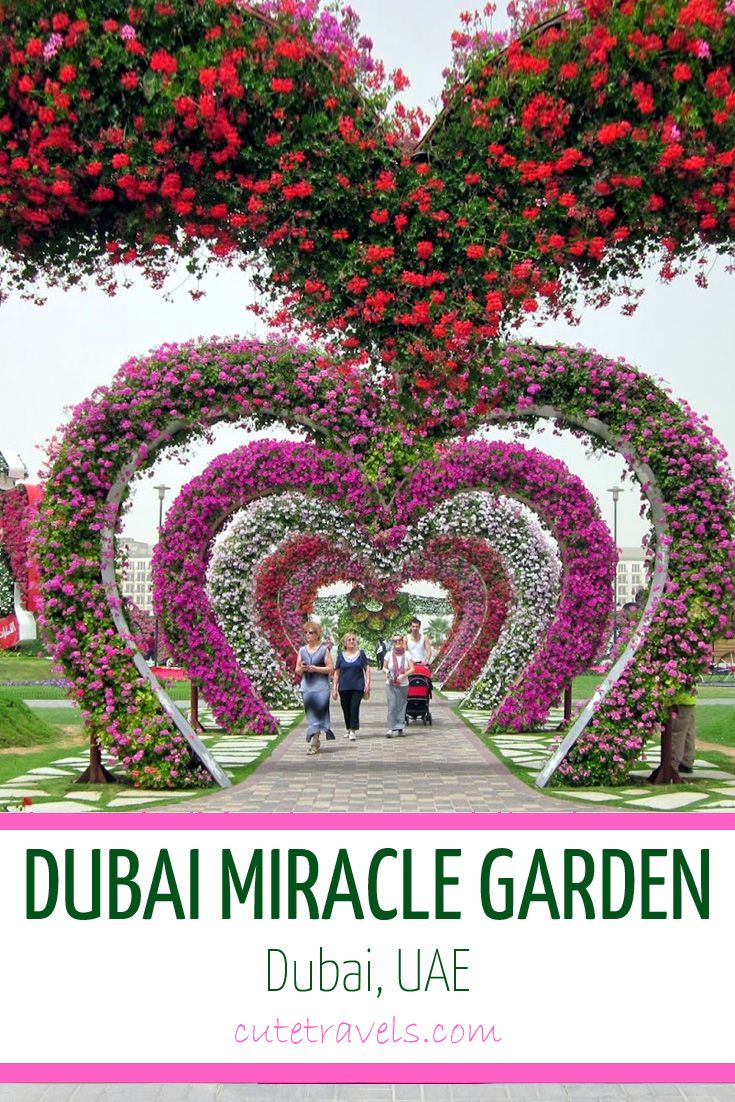 Dubai Miracle Garden the largest flower garden in the