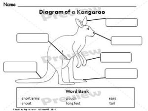 1000 images about kangaroo on Pinterest   Lesson plans