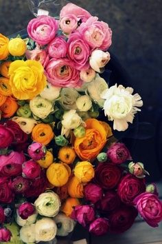 Ranunculus flowers, one of my faves