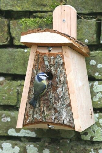 Bird House Starling Plans