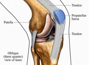 human knee anatomy diagram | Ideas for the House