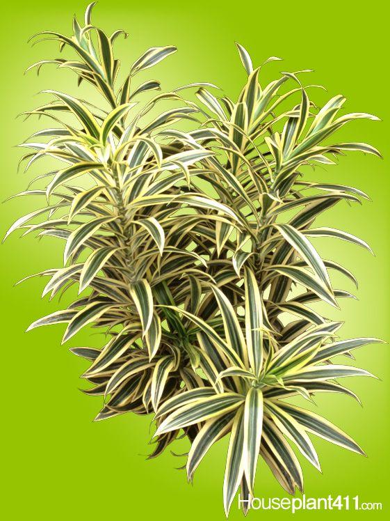 Plants Leaf Palm Identification Indoor