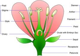 This is a picture of a plant with its parts labeled