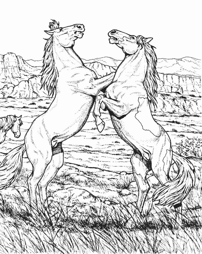 Wild Horse Coloring Pages Wild Horse Animal Coloring
