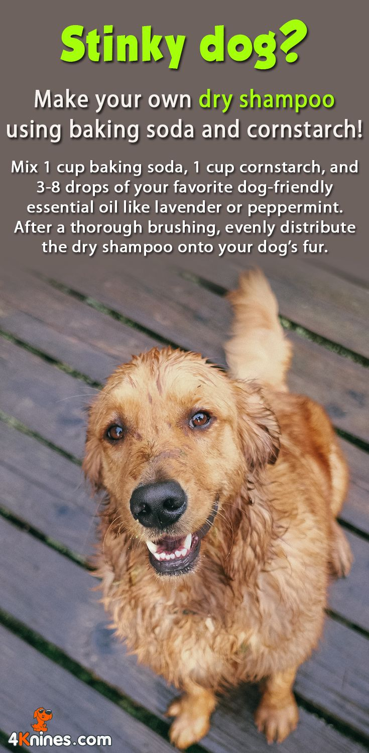 How make your own dry shampoo for dog