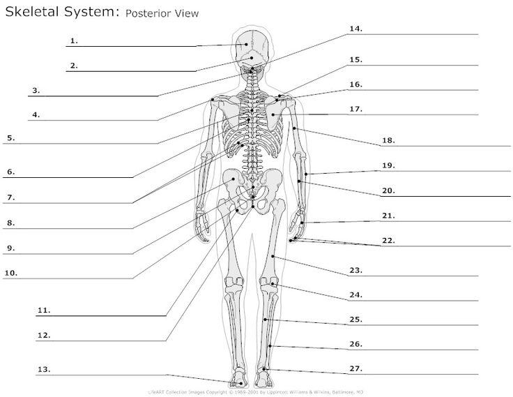 Anatomy Labeling Worksheets