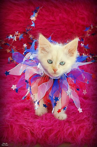 96 Best Images About 4th Of July Cats On Pinterest