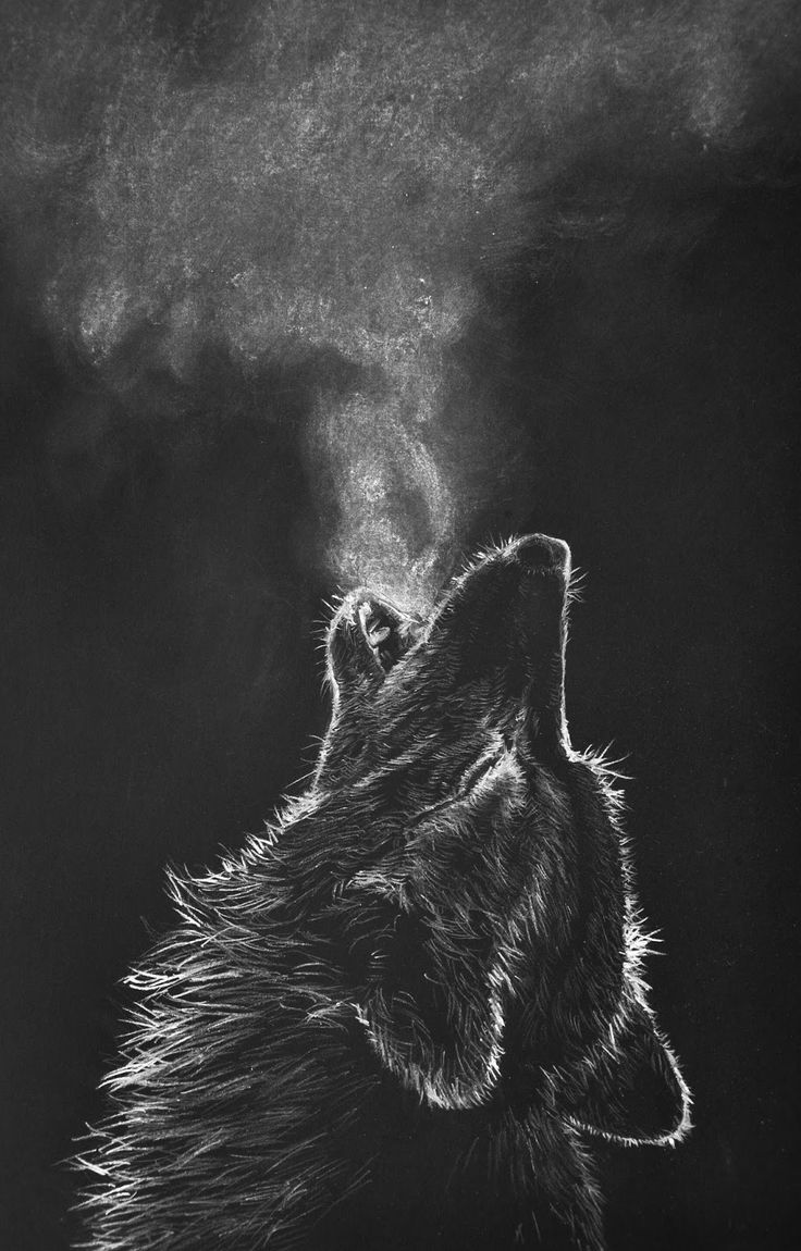 white charcoal drawing black paper wolf Google Search