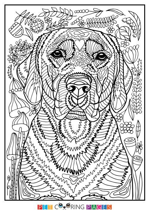 17 Best Ideas About Coloring Pages For Adults On Pinterest