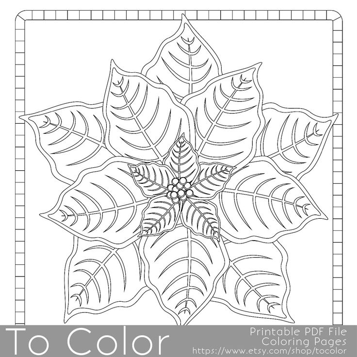 This Christmas poinsettia coloring page for adults has a
