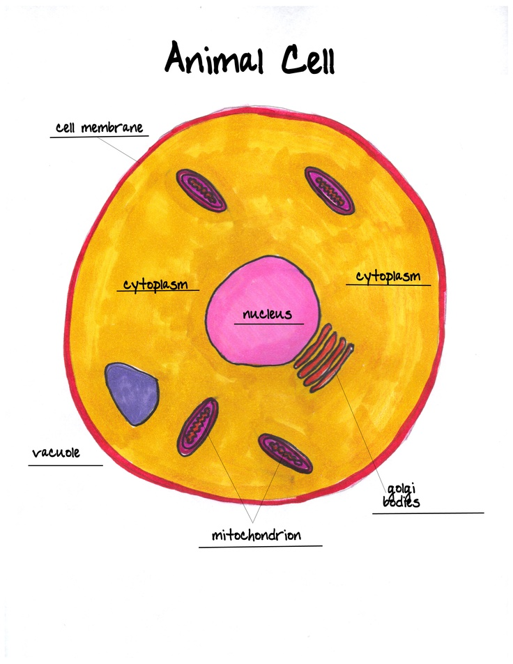 animal cell labeled Classical Conversations Cycle 1