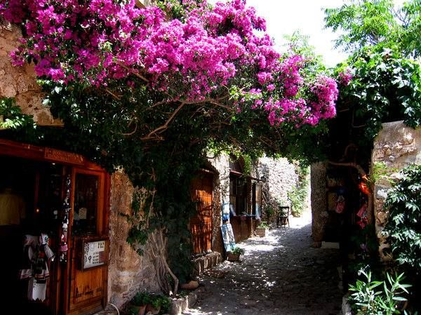 17 Best Images About Bougainvillea On Pinterest