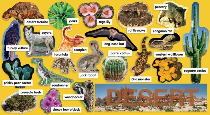 Desert Plants & Animals Mini bulletin Board Idea for