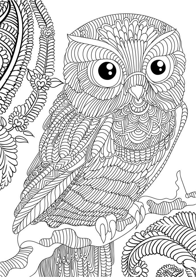 adult books and owl on pinterest