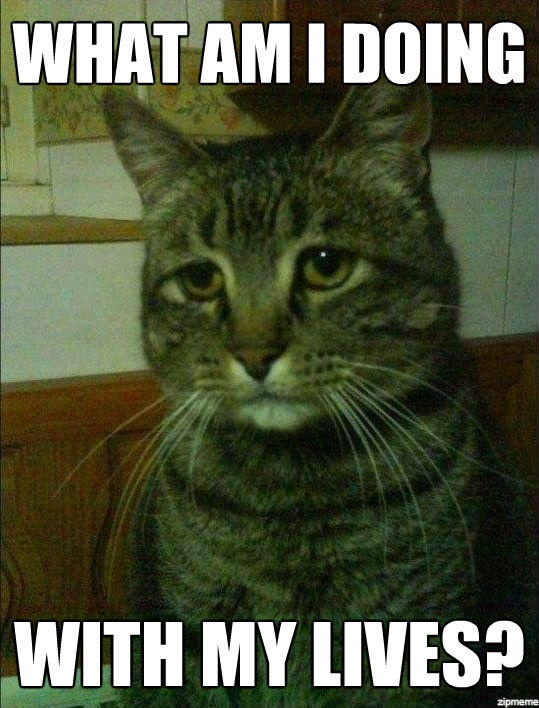 This cat is having an existential meltdown. Cat Memes