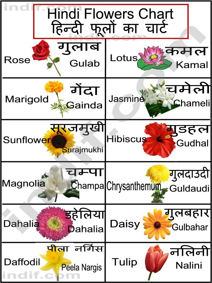 hindi flowers chart 158. INDIA Language Hindi & Urdu