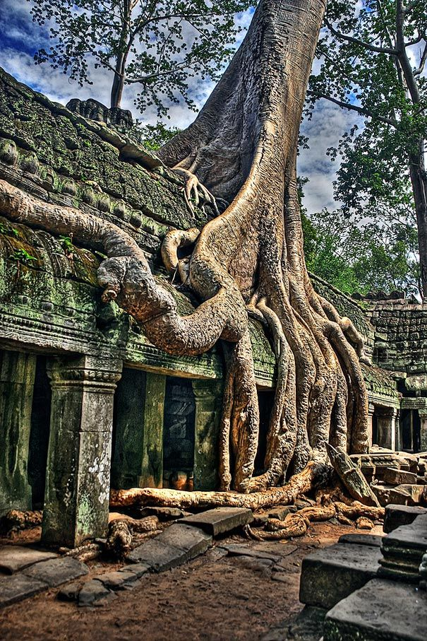 Angkor Wat is a temple complex at Angkor, Cambodia, built by King Suryavarman II in the early 12th century as his state temple and