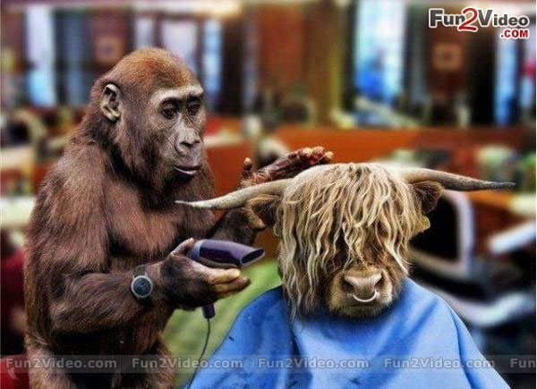Funny Barber For Perfect Haircut More Funny Animal Pics