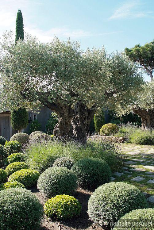 Jardin mediterraneen. Paysagiste Fanny Chaboud, Jean