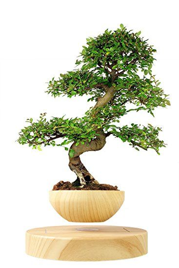 Levitating Bonsai Plant