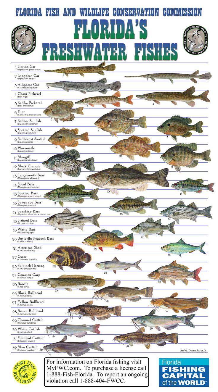 Florida native, freshwater fish Fishing Pinterest