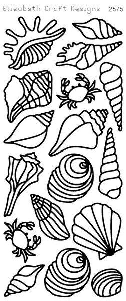 Seashells Sku 2575 Products And Seashells