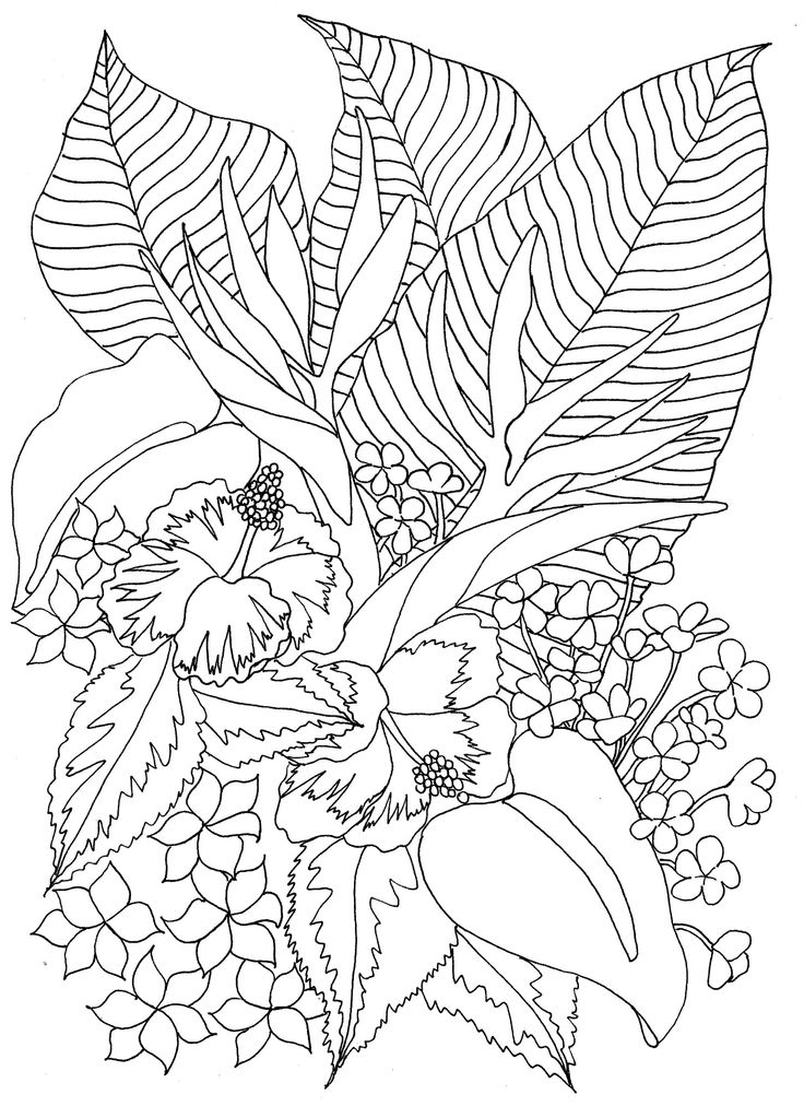 flower coloring pages coloring pages and tropical flowers on