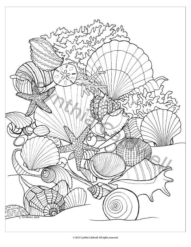 seashells coloring sheets coloring pages