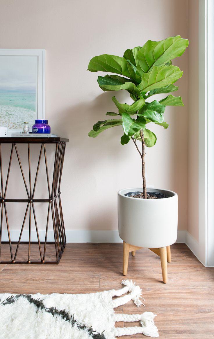 Top 25 Best Blush Walls Ideas On Pinterest Pink Bedroom Walls Pink Walls And Rose Bedroom