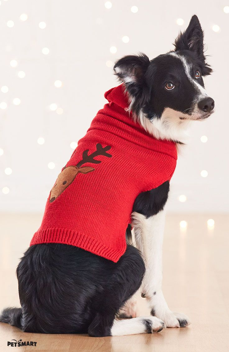 This Martha Stewart Pets dog sweater will let your pup