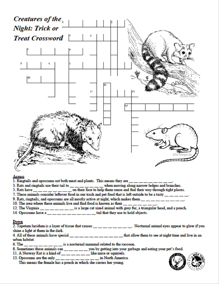 Creatures of the Night Crossword Puzzle Texas Wildlife