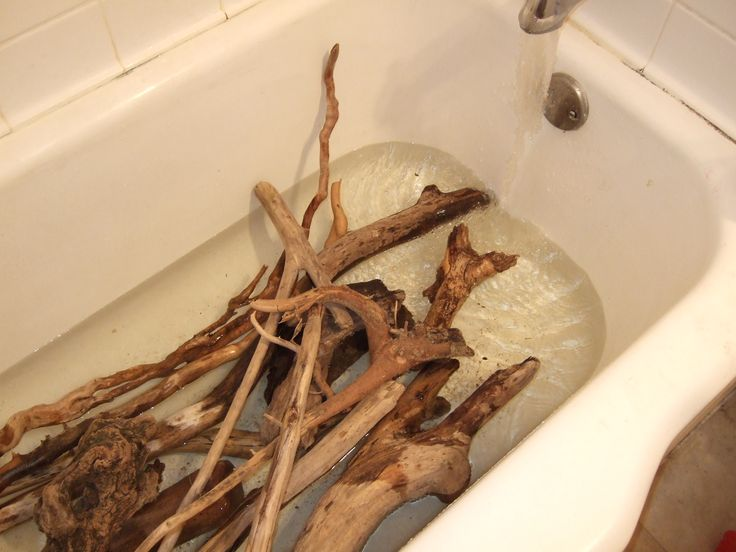 How Sterilize Driftwood Soak The Driftwood In A Bathtub Full Of Water For A Couple Hours Put