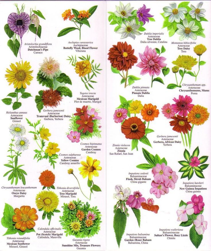 Flowers Chart With Names In English 195410 1 jpg Vintage