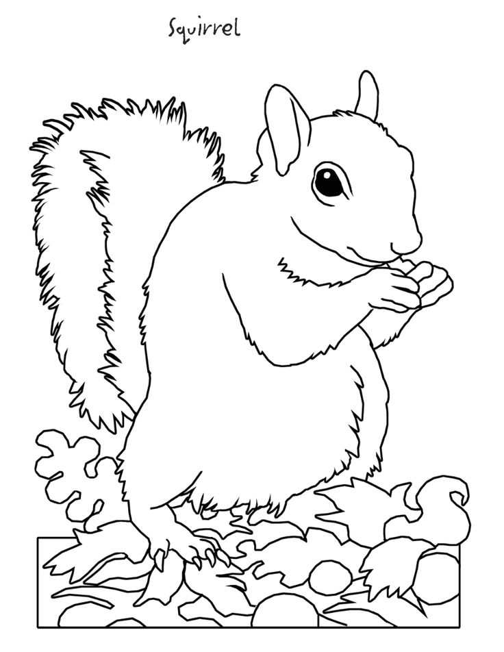 32 best images about coloringforest animals on pinterest