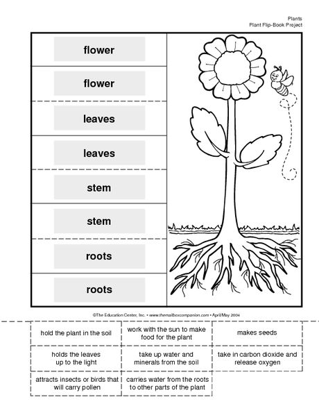 Science Booklet plant parts and their functions