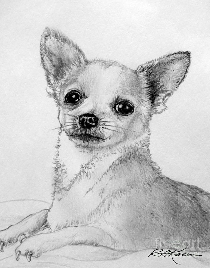 0 images about chihuahua on pinterest  chihuahuas