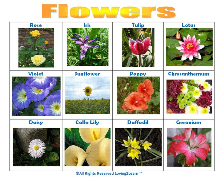 """Print off this """"Flowers"""" chart!"""