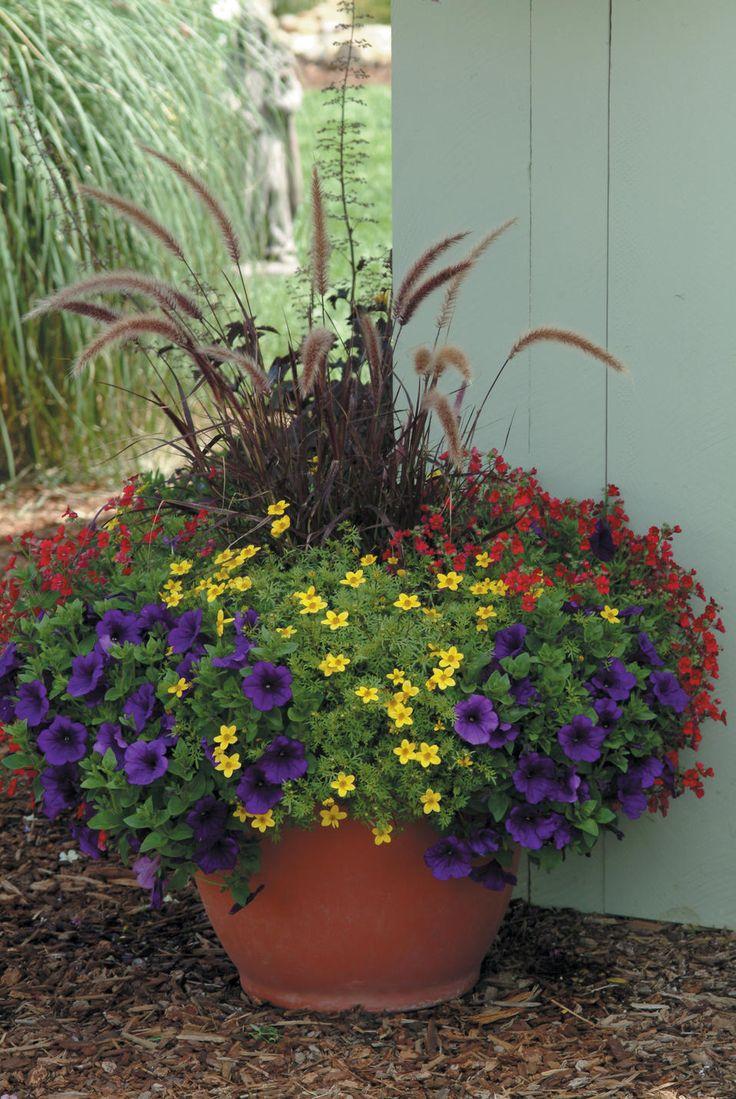 Purple fountain grass, petunia, nemesia, and bidens