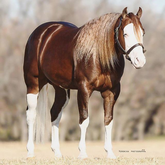 1000 Images About Reining Horses On Pinterest Smoking