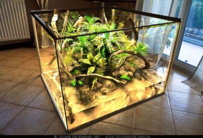 51 best Awesome Reptile Terrariums & Vivariums images on ...