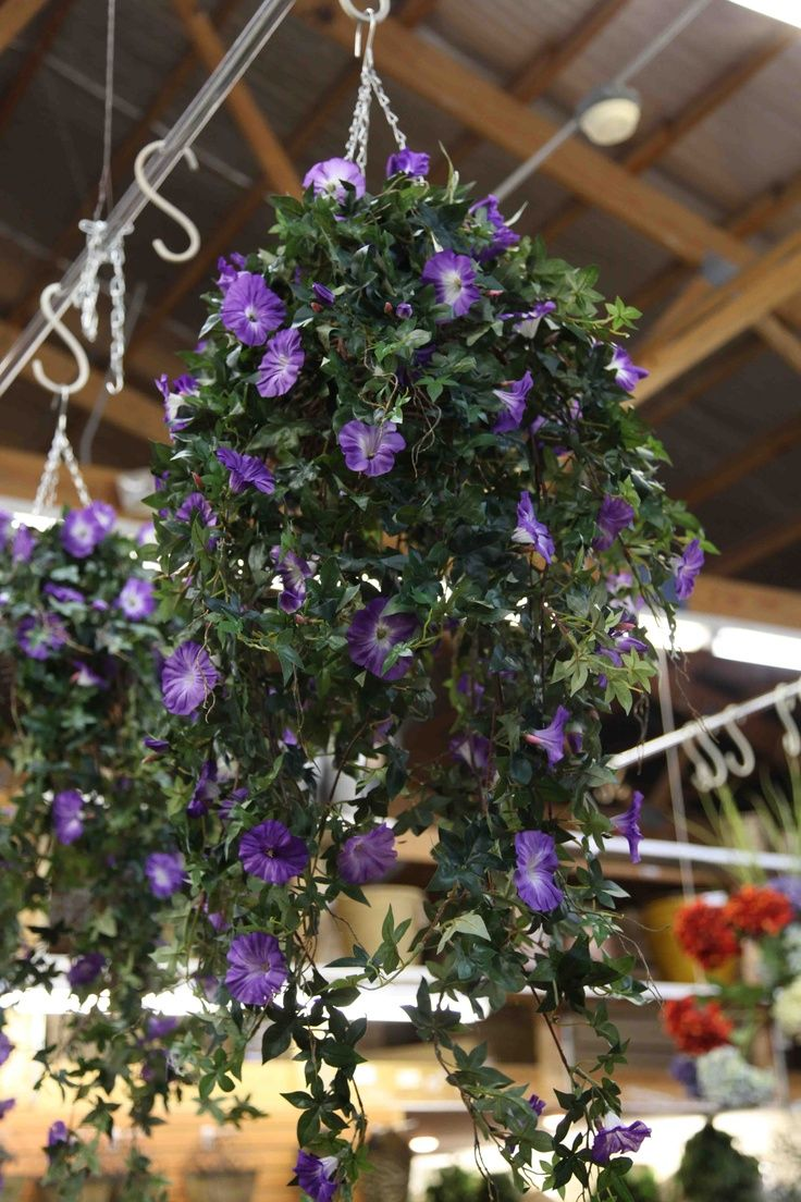 Morning Glories Porch Google Search Now Why Didnt I Think Of This Idea For Hanging My Potted