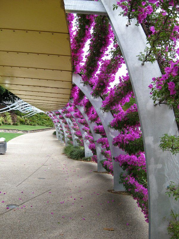 Bougainvillea Wall Trellis Bougainvillea Trellis Wall