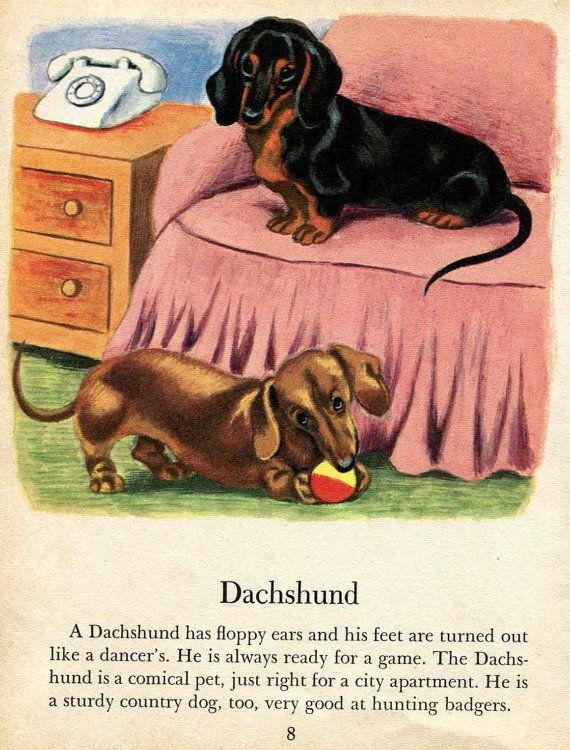 25 Best Ideas About Vintage Dachshund On Pinterest