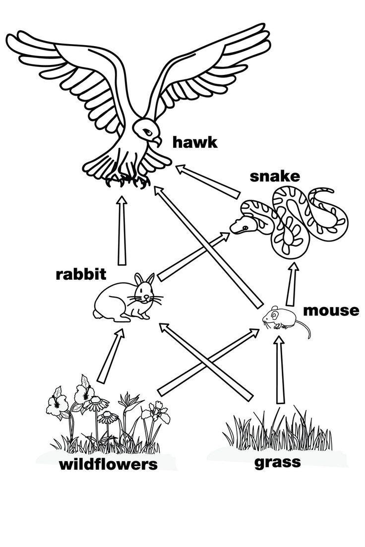 Image Result For 8th Grade Biology Book