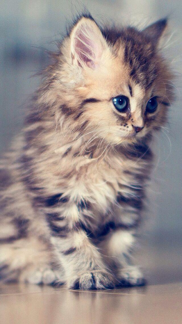 Wallpaper for Smartphone Cat Pinterest Smartphone
