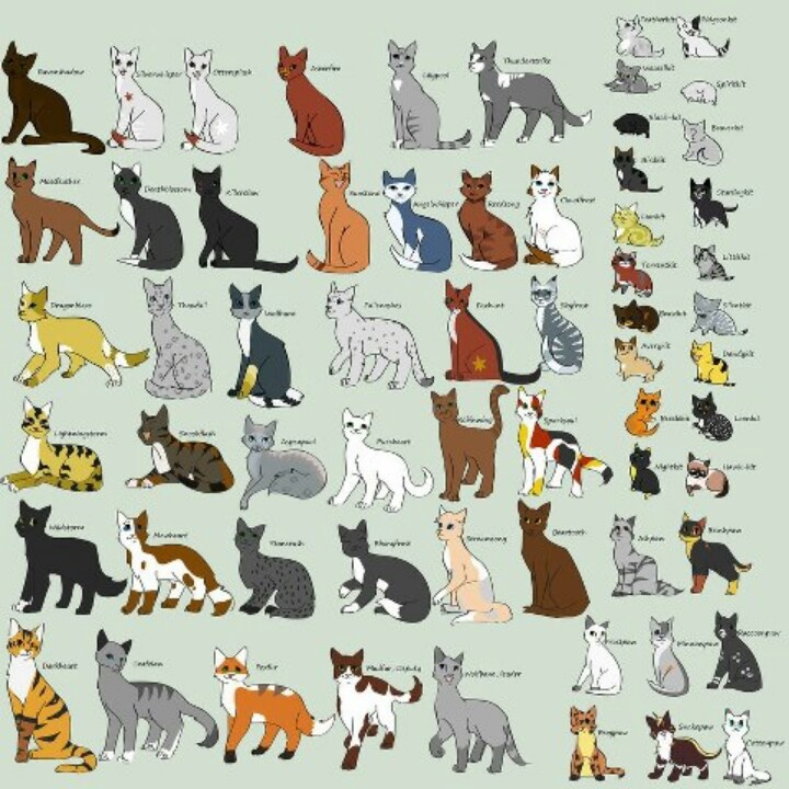 Types of cats Cat Types Pinterest Cats, Types of