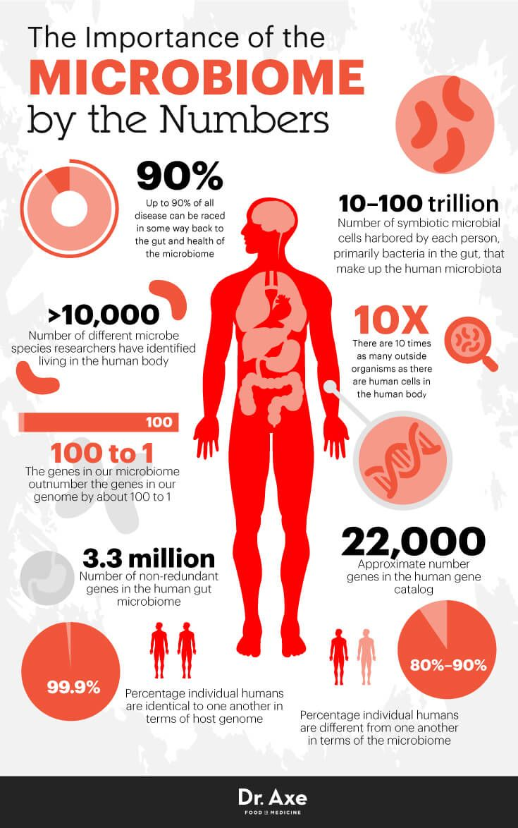 Human Microbiome How It Works + a Diet for Gut Health