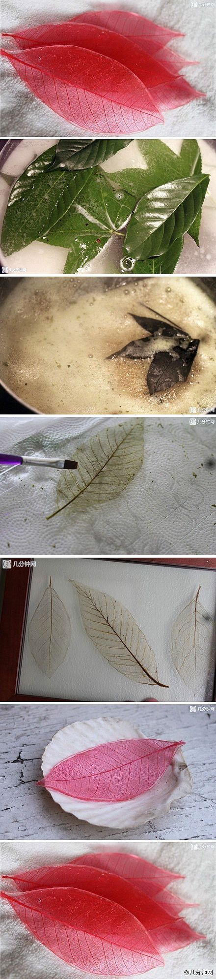 Something to try… Simmer thick leaves in a baking soda mixture. It should leave behind the skeleton of t